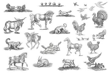 Animals  set illustration