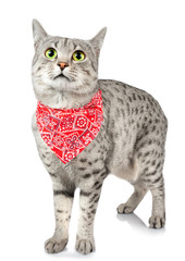 Wall Murals Red, black, white Cute Spotted Cat with Bandana