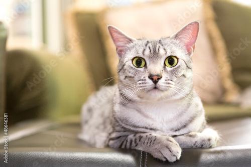 citrus oil cat repellent