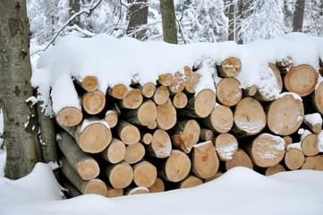 Ścięte drzewo przysypane śniegiem