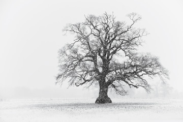 Snowy Tree Scene Black & White
