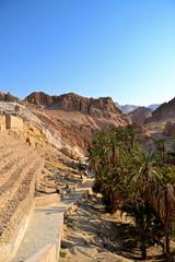 canyons and palm trees - an Oasis of Nefta, Chebika, Tunisia