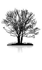 Baum auf einer Insel im See