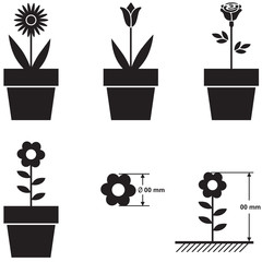 Flowers in pots and flower size scheme
