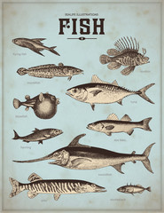 sea-life illustrations: fish (1)