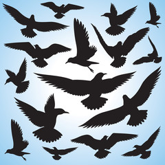 flock of flying birds and sky