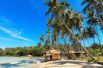 Тростниковый домик среди кокосовых пальм на берегу моря