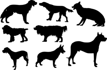 set of eight isolated dogs