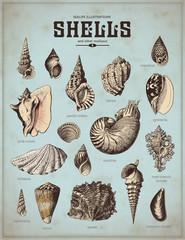 Fond de hotte en verre imprimé Affiche vintage sea-life illustrations: shells (1)