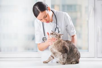 Veterinarian examining teeth of a cat while doing checkup at cli