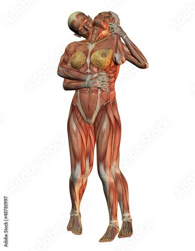 Anatomie und Muskelstruktur\