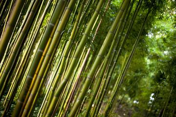 Bambou, asie, chine, jardin, végétal, vert, forêt, tronc