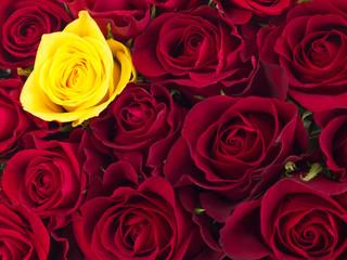 Closeup of roses