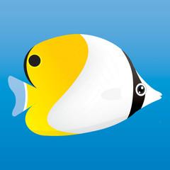 Yellow, black and white angel fish
