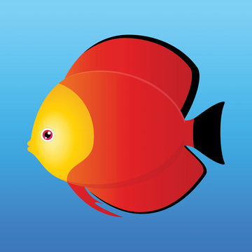 Yellow, black and red monk discus fish