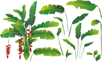 vector set of exotic tropical banana leaves