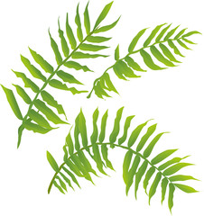 vector illustration of exotic tropical fern leaves