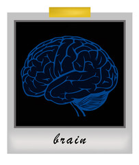 photo frame with human brain. vector illustration