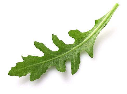 Ruccola leaf in closeup