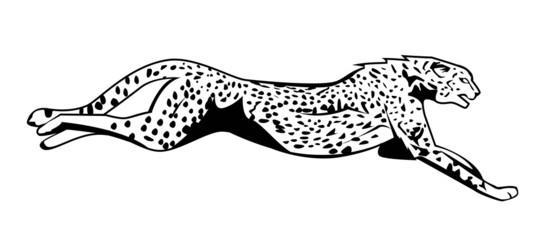 cheetah jump