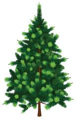 Vector Fir Tree