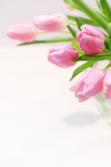 Beautiful pink tulips in the vase