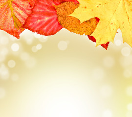 autumn leaves on soft background