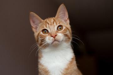 Ginger stare