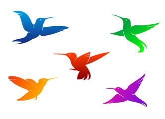 Flying hummingbirds