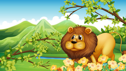 A lion in a green mountain area