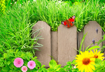 Wall Mural - Summer background