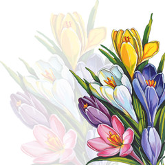 horizontal floral design element with snowdrop