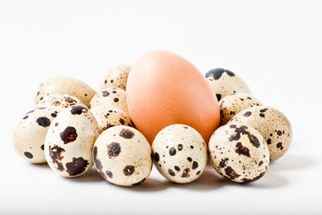 Chicken egg between quail eggs