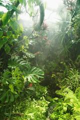 Wall Mural - Tropical rainforest