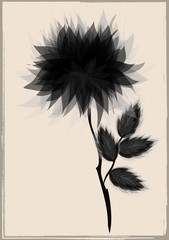 a beautiful black flower by vintage frame