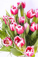 Fototapete - Pink and white tulips