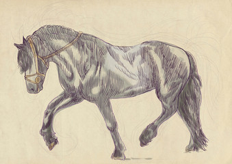 A hand drawn illustration of galloping horse