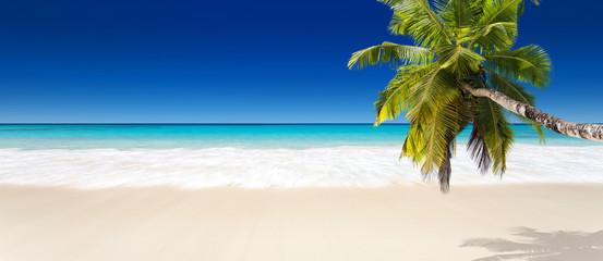 Stores photo Palmier seychelles plage