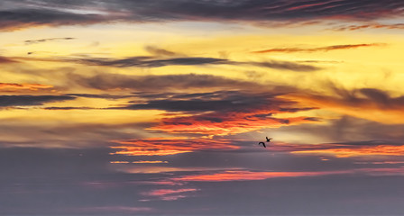 birds in the sunset sky