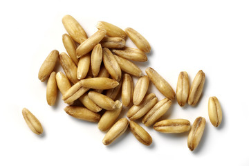 oat grains isolated