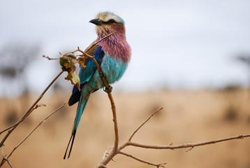 Uccello mediterraneo