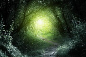 Foto auf Acrylglas Khaki way in deep forest