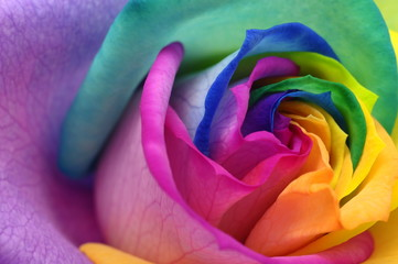 Foto auf AluDibond Makro Close up of rainbow rose heart