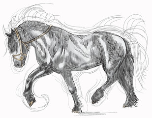 horse - hand drawing into vector
