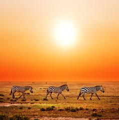 Obraz Zebry na Afrykańskiej sawannie - fototapety do salonu