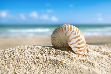 nautilus shell  with ocean , beach and seascape, shallow dof