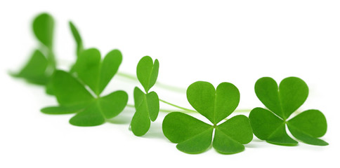 Clover leaves