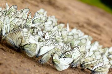 Группа бабочек.