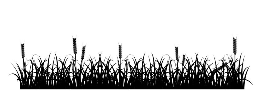 Grass and Wheat Silhouette