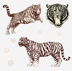 Vektor Set: Tiger Gestalten und Kopf